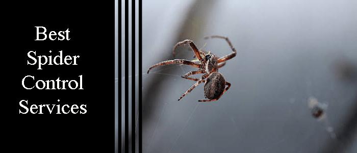 Best Spider Pest Control Services