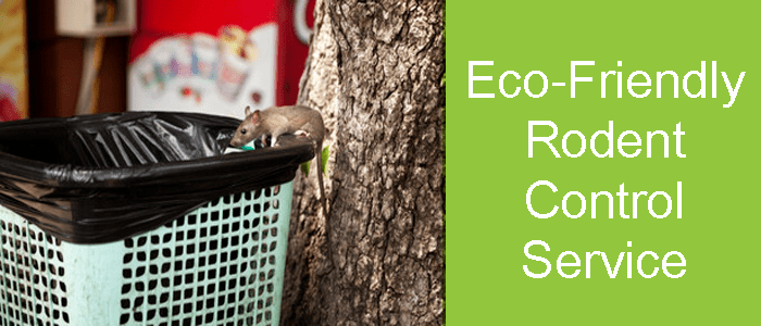 Eco-Friendly Rodent Control Service
