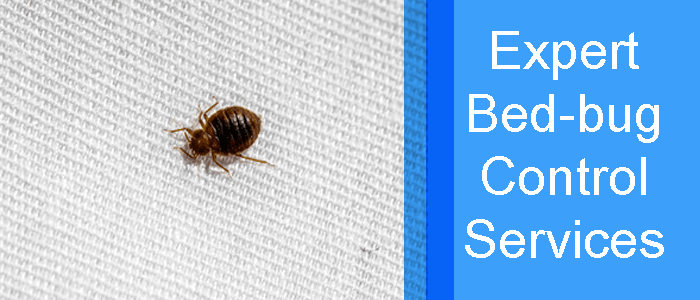 Expert Bed Bug Control Service