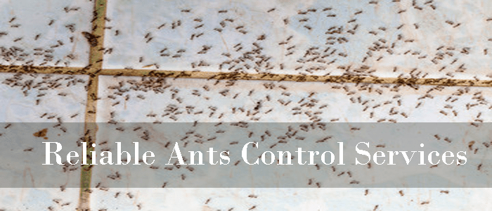 Reliable Ants Control Services